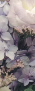 Rev Formal Lilac pastals 2