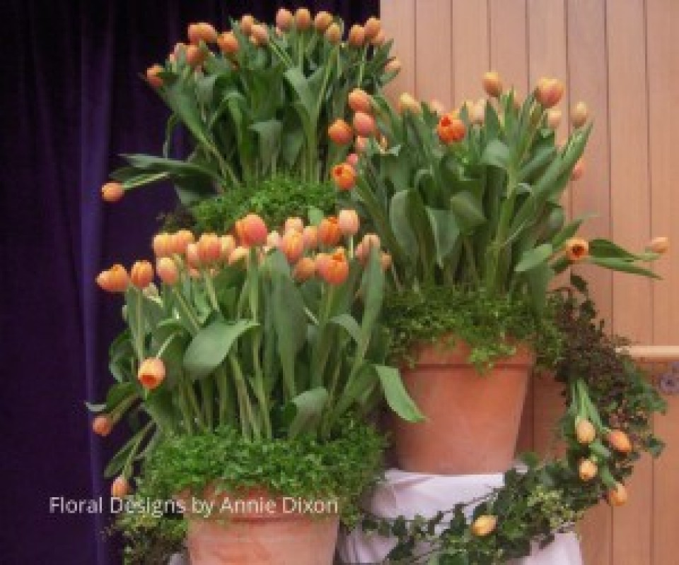 Corporate arrangement of tulips in large pots