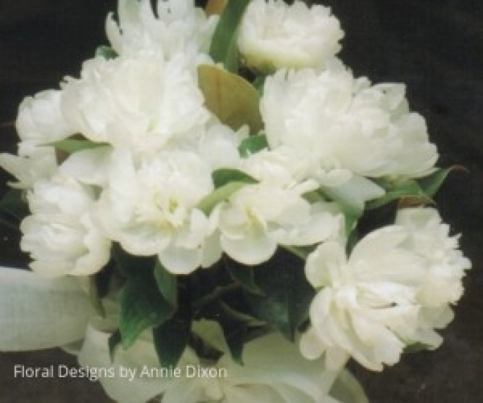 Loose natural stem bouquet of open peonies
